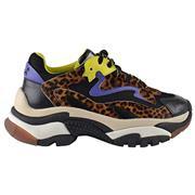 Ash Addict Leopard